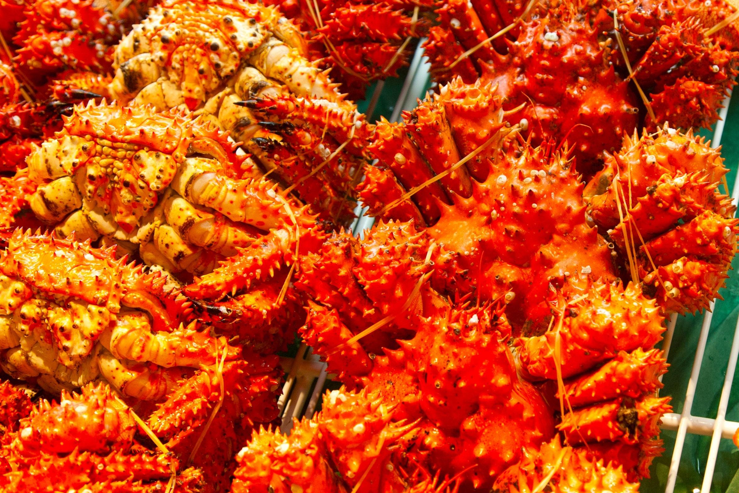 ハナサキガニの特徴とおすすめのレシピのメイン画像