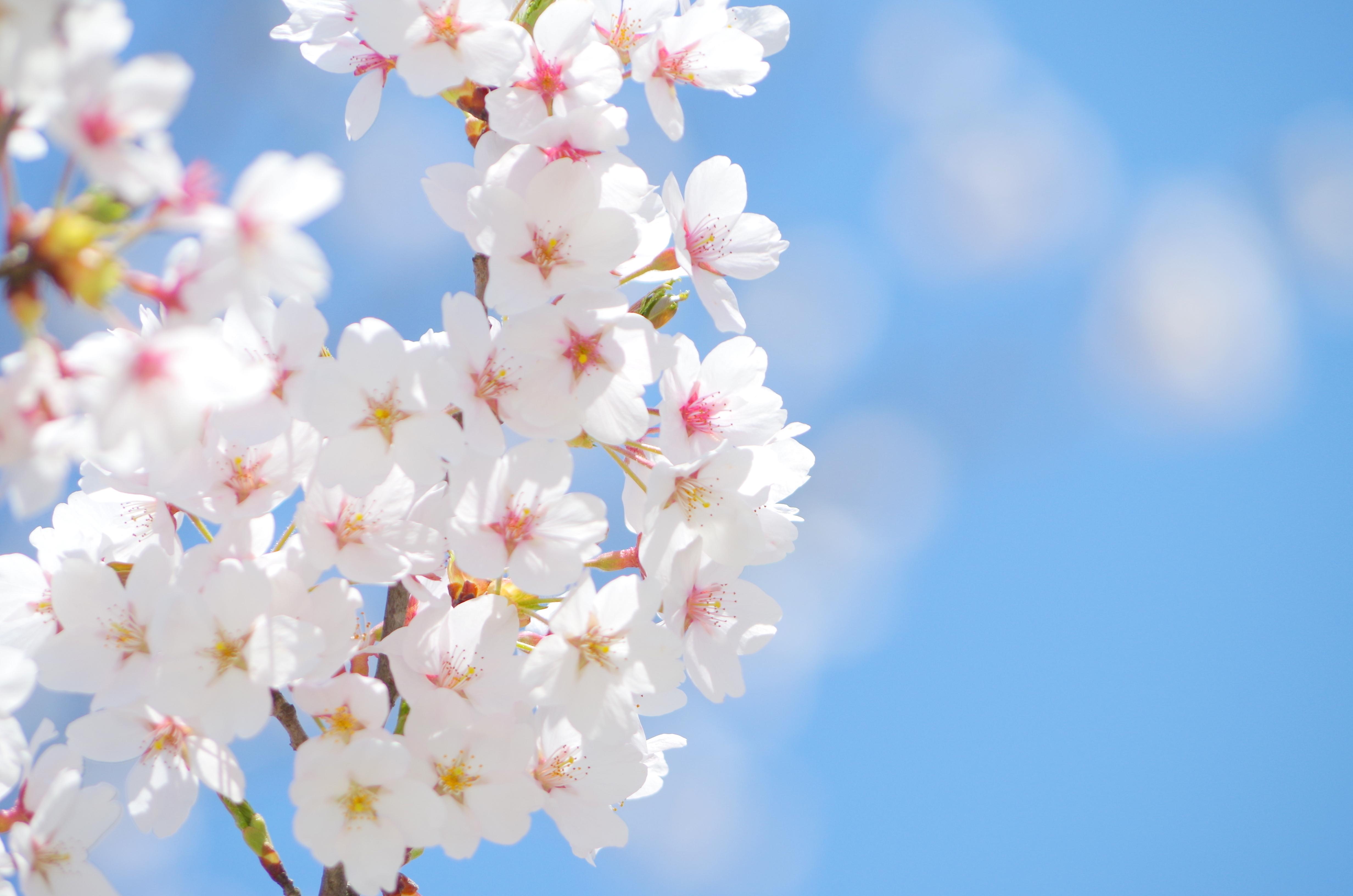 春の「ハレの日」は、晴れやかな「かに料理」で祝おう!